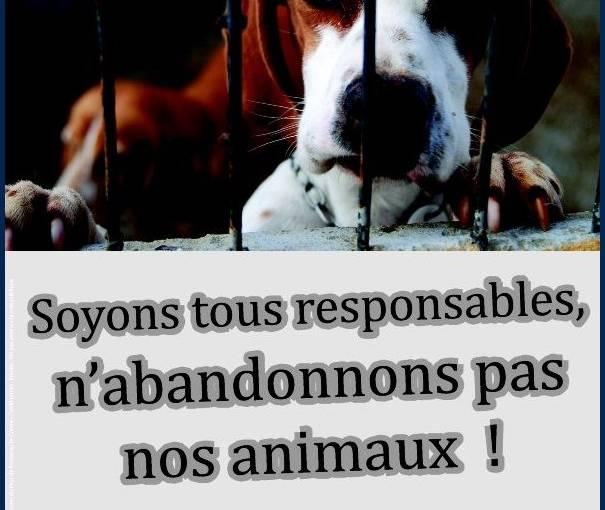 affiche chien